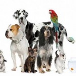 ITV casting for pet show – UK