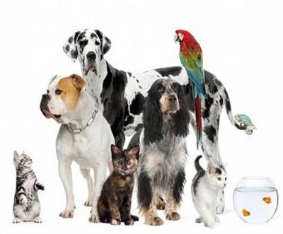 pet-casting-call2