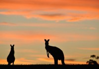 Brisbane Australia singer and dancer auditions