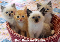 Pet Rescue Radio