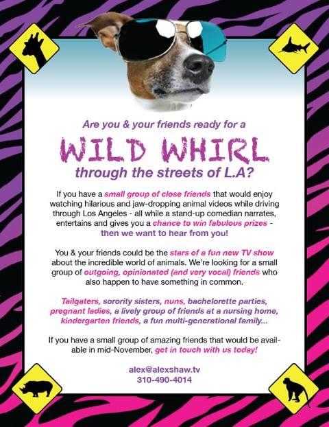 Wild Whirl