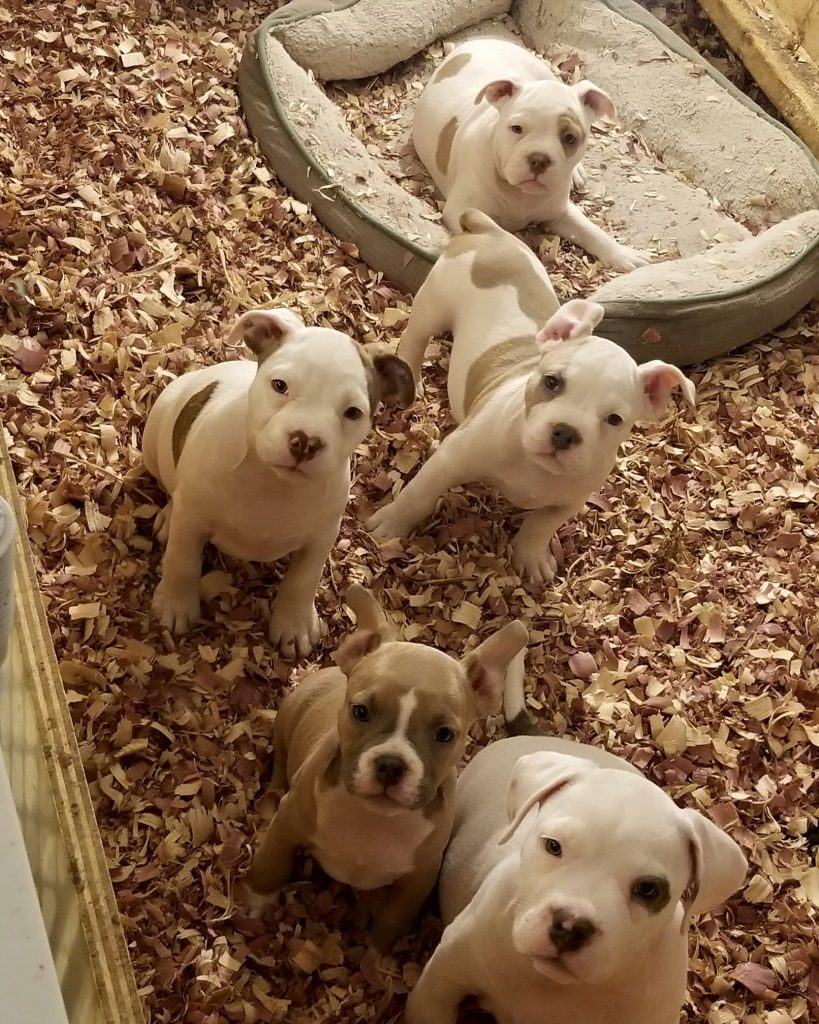 Puppy Auditions for Indie Film \